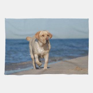 Gul labrador retriever på stranden kökshandduk