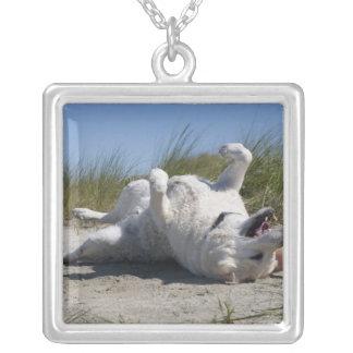 Gul Labrador Retriever Silverpläterat Halsband