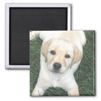 Gul magnet för kylskåp för Labrador Retriever