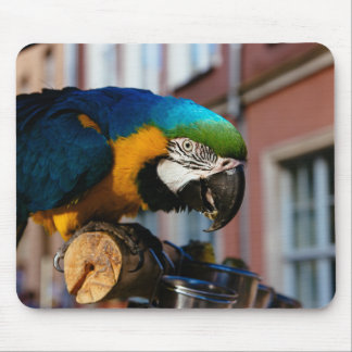 Gul och blåttMacaw, papegojafågeldjur Musmatta