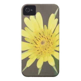 Gul Salsify iPhone 4 Case