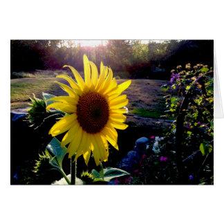 Gul solros på solnedgången --- hälsningskort