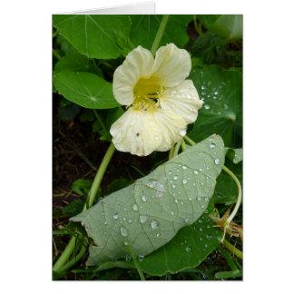 Gul trädgårds- Nasturtiumblomma Hälsningskort