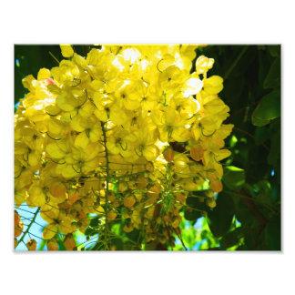 Gul tropisk blommaaffisch fototryck