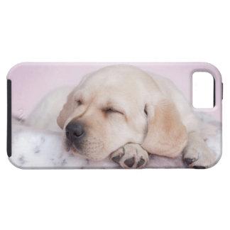 Gul valp för labrador retriever iPhone 5 Case-Mate skal