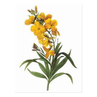 Gula blommor Pierre Joseph Redouté Vykort
