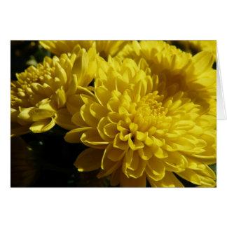 Gula Chrysanthemums OBS Kort
