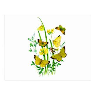 Gula fjärilar och gula vildblommar vykort
