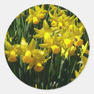 Gula påskliljar mig Cheery vår blommor Runt Klistermärke