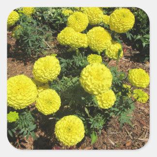 Gula växter för Pompomringblommaträdgård Fyrkantigt Klistermärke