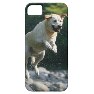 Guld- banhoppning för Labrador Retriever in i iPhone 5 Cover