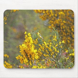 Guld- Finch och gula blommor Musmatta