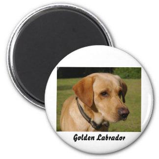 Guld- Labrador Magnet