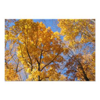 Guld- löv fototryck