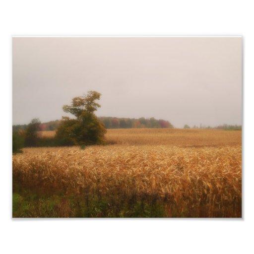 Guld- majfält i höst vid Shawna Mac Fotografiskt Tryck