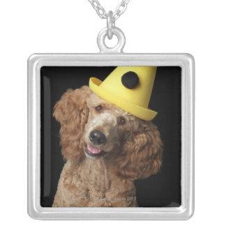 Guld- pudelhund som ha på sig en gul clownhatt silverpläterat halsband