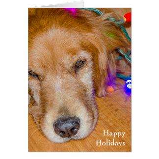 Guld- retriever för jul i tilltrasslat ljus hälsningskort
