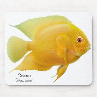 Guld- Severum Cichlid Mousepad Musmatta