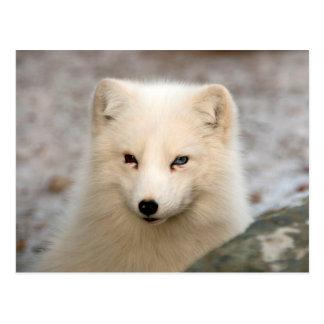 Gullig arktisk räv vykort