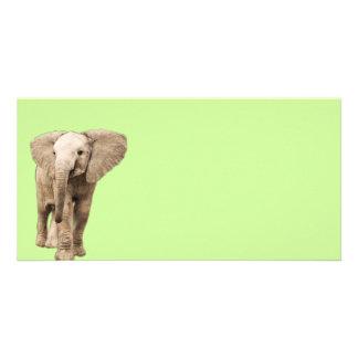 Gullig babyelefant fotokort