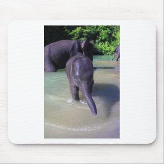 Gullig bebiselefant i floden musmatta