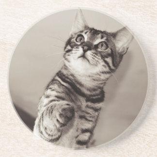 Gullig Bengal kattunge Underlägg Sandsten