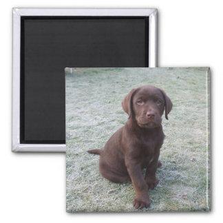 Gullig brun magnet för labrador valpkyl
