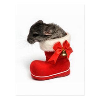 Gullig Chinchilla i julstrumpa Vykort