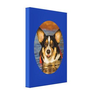 Gullig Corgi med blåttbakgrund Canvastryck