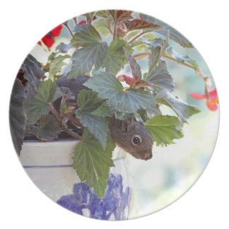 Gullig ekorre i en blommakruka tallrik