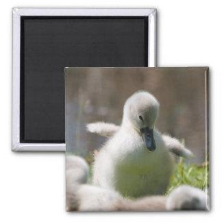 Gullig fluffig magnet för cygnetbebissvan, gåva
