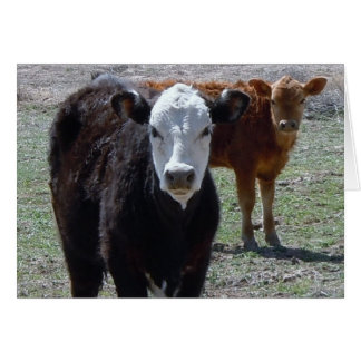 Gullig grattisVetstudent - ranchlantgård DVM Hälsningskort