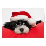 Gullig hund för julHavanese valp