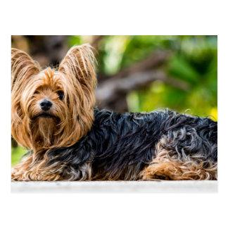 Gullig hund för Yorkshire Terrier i trädgård Vykort