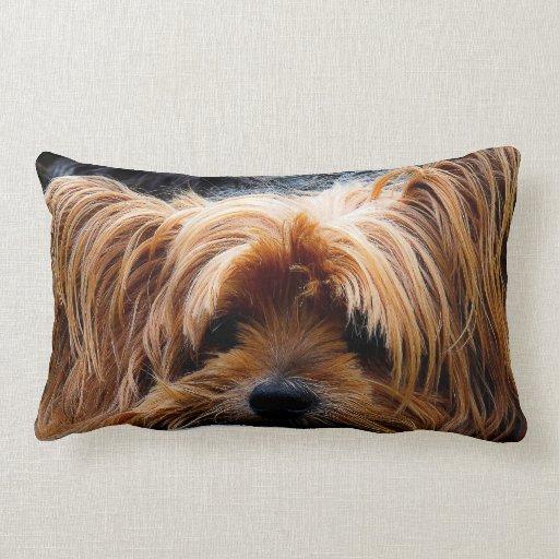 Gullig hund för Yorkshire Terrier Kuddar