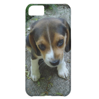 Gullig iPhone 5 för ansikte för Beaglevalphunden iPhone 5C Fodral