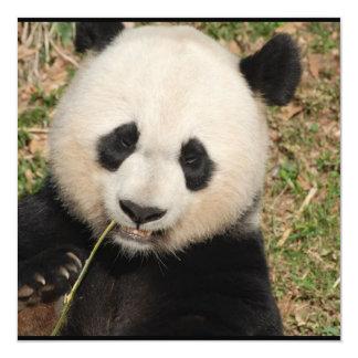 Gullig jätte- Pandabjörn Fyrkantigt 13,3 Cm Inbjudningskort