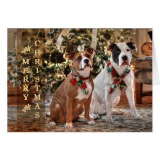 Gullig julrädding Pitbull och Amerika tjurhund Hälsningskort