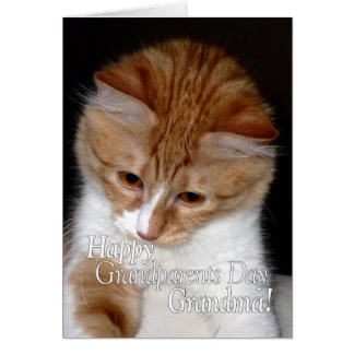 Gullig katt för lycklig morförälderdagmormor hälsningskort