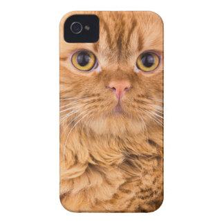 gullig katt iPhone 4 skydd