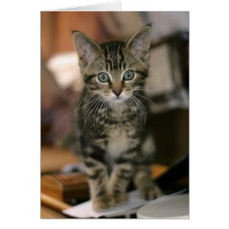 Gullig kattunge för Tabby för Maine Coonbrunt, Hälsningskort