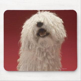 Gullig Komondor hund Musmatta