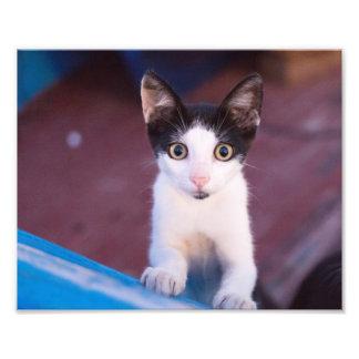 gullig lite katt fototryck