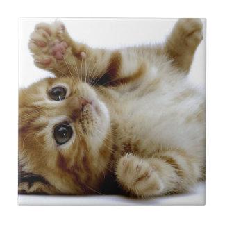 gullig lite tabby för ingefära för kattungekatthus kakelplatta