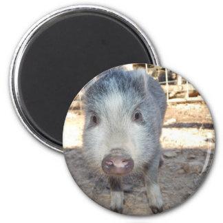 Gullig mini- gris magnet