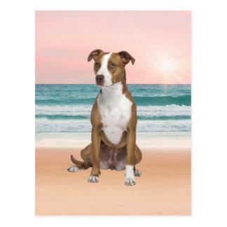 Gullig Pitbull hundsitta på strand med solnedgång Vykort