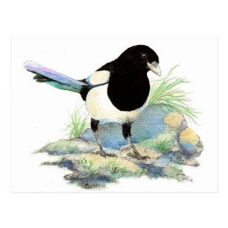 Gullig skata - vattenfärgfågel vykort