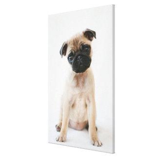 Gullig ung mopshund canvastryck