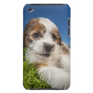 Gullig valphund (Shitzu) iPod Touch Skydd