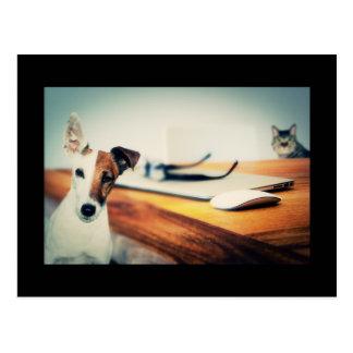 Gullig vykort för hund och för katt i